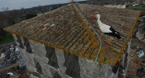 Cigogne.St.Denis2P