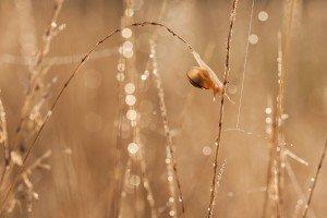 IMG_0788-L'instant fragile de l'équilibre naturel