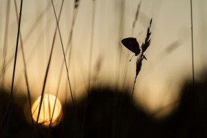 IMG_1096-Mélancolie au soleil couchant