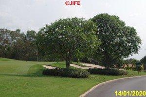 Golf SIAM_07